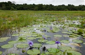 wetland-1